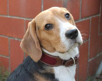 PoochMate Chelsea Dog Collar - Wine Medium