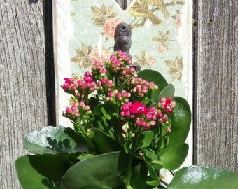 Heart Reclaimed Wood Shabby Chic Bird and Blossom Plant Pot Holder