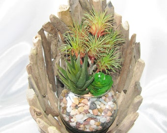 Faux Succulent Planter in Driftwood Shell, Centerpiece, Faux Succulent Arrangement, Housewarming Gift, Unique Succulent Gift
