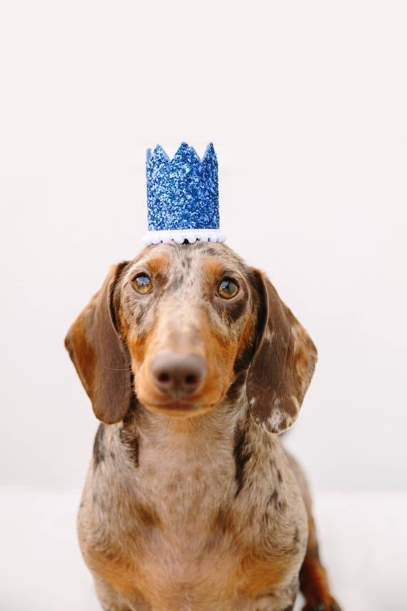 Dog Birthday Hat || Dog Birthday Crown || Animal Birthday Crown || Pet Accessory || Dog Party Hat || Kitty Cat Pig Birthday Hat
