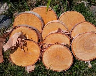 Set of 10 Birch Slices,Birch Slabs,Birch Discs,Birch Bark,Birch Tree,Wood,Craft,Material,Natural,Wedding,Holiday,Christmas