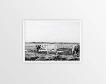 HORSE Print, Horse Photography, Horse Decor, Large Printable Wall Art, Printable Poster, Large Prints, Black and White photography