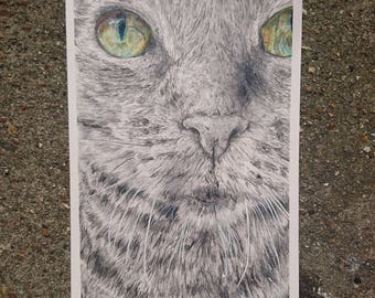Detailed cat drawing