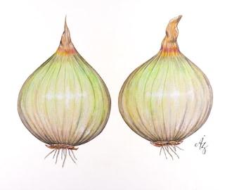Yellow Onion Art Print, Realistic Art, Vegetable Wall Art, Onion Wall Art, Onion Art, Kitchen Art, Wall Decor