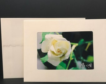 Single Blank Note Cards - White Rose Bloom