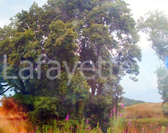 Postcard Tree to Edinburgh