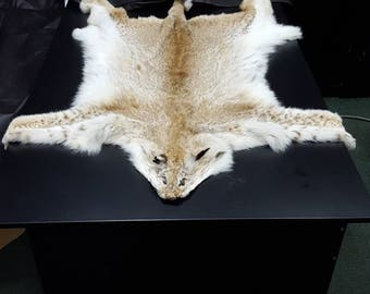 Siberian Lynx Cat Pelt Skin