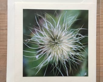 Seed head greetings card blank for your own message