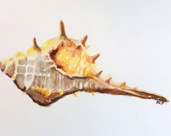 Watercolor Sea Shells
