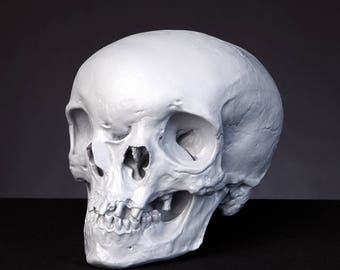 Monocephalus Skull Reconstruction 1:1 Scale