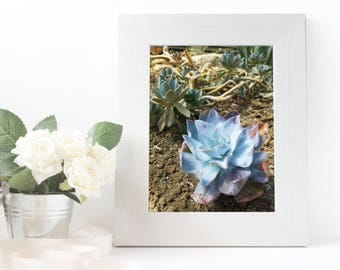 Blue and Purple Star Succulant Photograph | Cactus Photograph | Digital Download