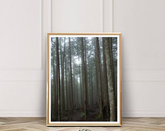 Forest Print, Forest Photography Print, Forest Wall Art, Digital Download, Forest Art, Forest Printable, Instant Download, Home Decor