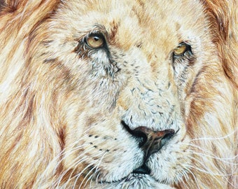 Lion print, limited edition, hand signed fine art giclee print - 'I've Got My Eye On You'