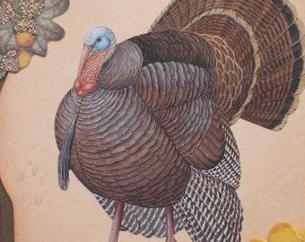 Turkey Thanksgiving Card