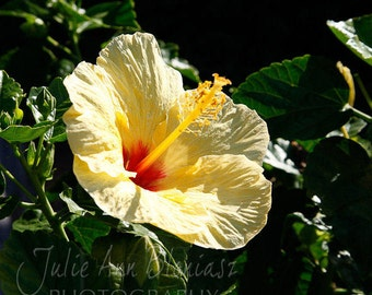 Yellow hibiscus photo pillow