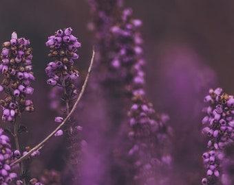 Photography, Flower print, Flower photography, Nature art, Living decor, Home decor, Vintage, Nature decor, Still life, Wall art, Download