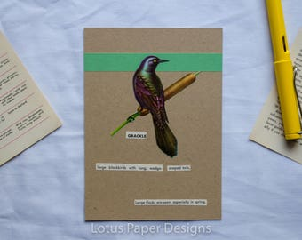 Handmade Blank Greeting Card (Flat A6) - Grackle - Golden Guide to BIRDS