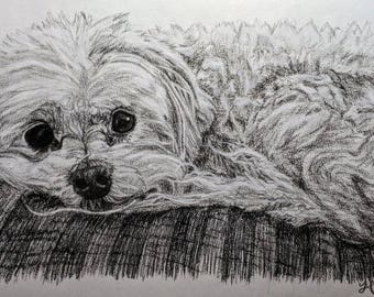 Charcoal Pet Portrait