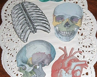 Anatomical Sticker Assortment Printed Hand Cut Matte Paper or Vinyl Medical Science Grays Anatomy Seals Scrapbooking Paper Craft Supplies