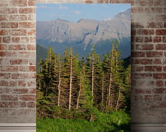 Forest Photography, Mountain Landscape Print, Colorado Decor, Rocky Mountains, Pine Forest, High Elevation, Hiking, Adventure Print, Nature