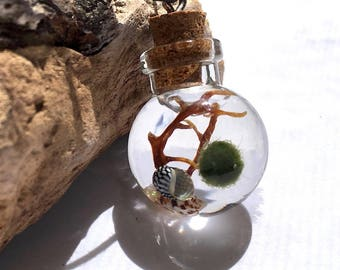 SALE! Water Terrarium Necklace Lucky Marimo Moss Ball Live Plant Orb