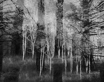 woods. double exposure, black & white #1