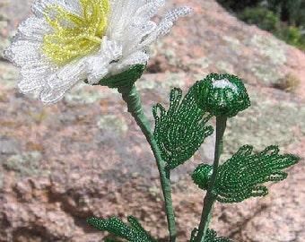 White Chrysanthemum with bud