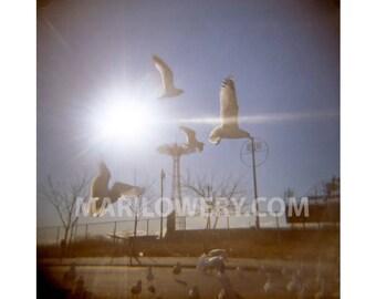 Coney Island Photography Print, 8 x 8 Inch Metallic Print, Brooklyn New York, Seagulls in Flight, Parachute Jump, Holga Photography