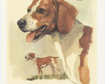 Braque allemand 1975 Illustration de chien vintage  Cadeau chien Portrait de chien Aquarelle de chien Peinture de chien