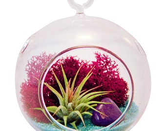 Mini Air Plant Terrarium Kit with Fuchsia Moss, Turquoise Sand and Purple Agate Stone / Teardrop or Round / FREE SHIPPING