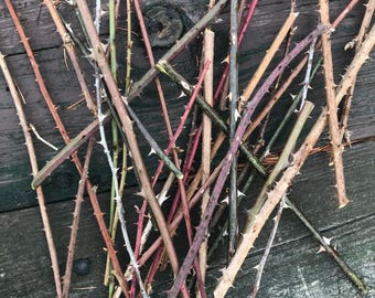 Thorn Branches, Dried Rose Stems for Vases and Home Decor, Branches, Dried Flowers, Sticks, Vase Decor, Thorns, Easter, Thorn Branches