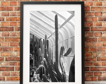 Cactus Row, Cactus, cacti, desert, conservatory, greenhouse, garden room, plants // NO FRAME INCLUDED