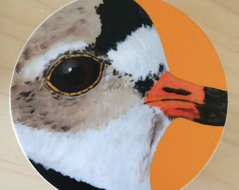 The Piping Plover, bird print laminated on a small wood box