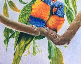 Lorikeets, PRINT,  Coloured pencil art, Parrot, Wildlife painting, Bird Art, Illustration Art, Parrot Art, Fine Art Prints, Free Shipping