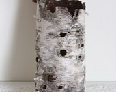 """Natural Birch Bark Sleeve for Crafting, Flower Arranging, Hollowed Naturally by Decay, Beautiful Sleeve of Birch Bark, Betula Bark """"D"""""""