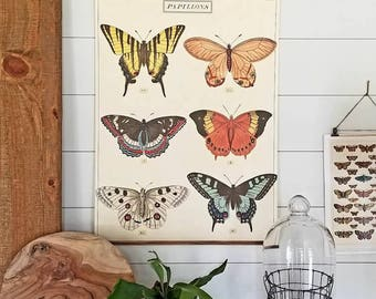 Vintage Insect Scroll- Papillons (Wall Hanging, HOME DECOR)