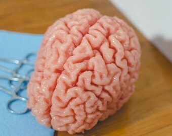 Realistic Anatomical Human Brain Squish/Desk Toy/Model