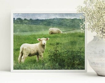 Farmhouse wall art, printable country decor, Lamb art, farmhouse wall hanging, stock photo, Sheep picture, commercial use,8x10, farm animal