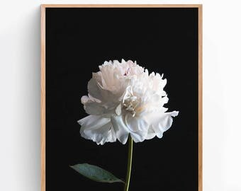 White Flower Art Print, Modern Print, Dorm Decor, Poster, Gift for Men, Gift for Women, Home Decor, Apartment Decor, Wall Art, Print [NA1A]