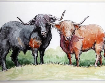 Two Scottish Highland Cows - art print