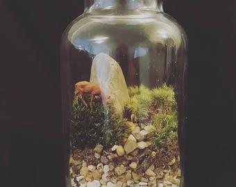 Live Moss Terrarium