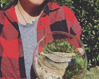Rock & Moss terrarium.