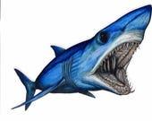 """8"""" Mako Shark Decal"""