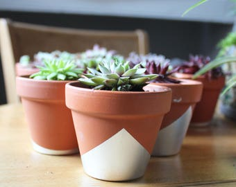 Set of 3 Sempervivum Succulent/Hen and Chicks Plants in Silver Terracotta Pot Potted Plant | Home + Living | Windowsill Planter with Plants