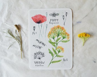 Poppy & Yarrow - Card