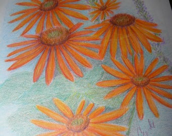colored pencil drawing orange daisies