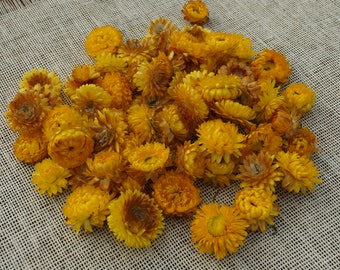 Dried everlasting flowers Christmas decor supply Fall colours Dried Helichrysum Wedding table decor Craft supplies Decor accents