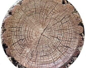 Cut Timber Dessert Plates (8 pack)