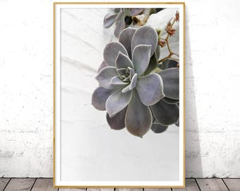 Succulent Wall Art, Botanical Print, Plant Wall Print, Succulent Plant, Digital Print, Printable Digital Download, Greenery Poster, Cactus