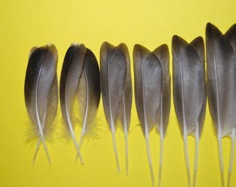 CS2 - Lot/Set of feathers/plumes natural of whistling duck brown/beige 7,5/9, 5cms X 6 pairs - subject.